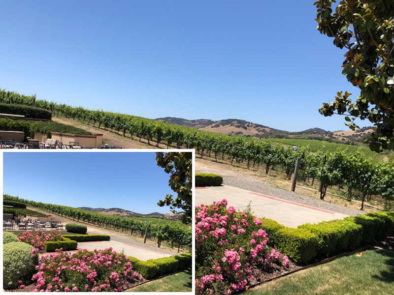 Explore Napa and Sonoma Valley in Luxury Vehicle